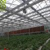 야채를 위한 단 하나 층 PC 장 온실