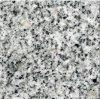رمادي اللون الجديد G603 رخيصة الجرانيت الطبيعي لأرضية