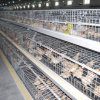 La alta calidad fácil de limpiar la jaula de Pullet pollo automático
