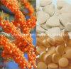 GMP 100% Natural Seabuckthorn Comprimidos Chewable, Anticancer, Radiação Resistência, Anti-envelhecimento, Remover Chloasma, Whitening, Alimentos saudáveis