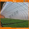 Chambre verte solaire d'Insulaion de la bonne chaleur pour la plantation végétale