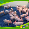 600*600mm PP piso de ripa de plástico de suínos