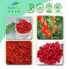 Выдержка Wolfberry поставкы Китая (полисахарид 30%)