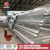 Kooien de van uitstekende kwaliteit van de Lagen van de Kip voor het Landbouwbedrijf van het Gevogelte in Afrika