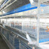 H Type Chicken Battery Cage Feeding System per Broiler