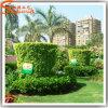 Proveedor de Guangzhou Topiary decorativo césped paisajismo plantas