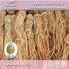 Extrait naturel d'angélique officinale de 100% (1% Ligustilides, taux : 10:1 20 de 5:1 : 1)