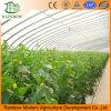 Invernaderos eficientes con energía solar y invernadero de tomate hidropónico