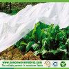 Tissu non-tissé de Ploypropylene pour l'agriculture