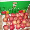Apple dulce rojo Qinguan Apple