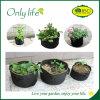 Onlylife ha ritenuto il sacchetto economico della piantatrice del giardino mini coltivare il sacchetto