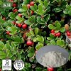 Extracto de la hoja Arbutin Bearberry Natural el 99% para blanquear la piel