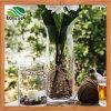 Vaso di fiore di vetro del vaso di Mouthblown