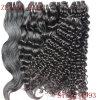 巻き毛のバージンのブラジルの人間の毛髪(ZYWEFT-258)