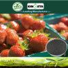 Il carbonio di resistenza di malattia di Kingeta ha basato il fertilizzante composto NPK 18-18-6