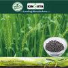 Le Carbone De Kingeta un Basé L'engrais Microbien compone (fertilizzante composto); Versare il DES Fleurs
