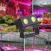 la pianta LED di 100W 150W 200W 250W 300W 500W si sviluppa chiara con lo spettro completo