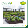 , nach der Verpflanzung, Onlylife Hilfe stellte schneller her wachsen Pflanzer