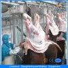 Cer Cattle Halal Abattoir Equipment in Slaughterhouse