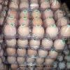 Doos van de Verpakking van de Plastic Container van pvc van het Dienblad van eieren de Beschikbare