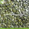 Venta caliente Gws secos los granos de semillas de calabaza