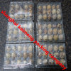 China Clear Plastic Quail Egg Cartons Reutilizável