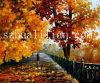 Het Olieverfschilderij van het impressionisme (IM40)