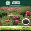 Kingeta contiene efficace il fertilizzante composto basato NPK 22-7-11 del fertilizzante del carbonio carbonio