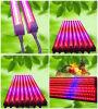 Il dell'impianto di T8 LED coltiva i tubi, LED coltiva i nastri chiari T8