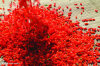 Baies séchés chinois Wolfberry Goji