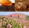 Il miele superiore del grano saraceno selvaggio del miele/miele della regina, il miele del Durian, anticancro raro e prezioso, antinvecchiamento, nutrisce l'anima, antiossidazione, eliminante i radicali liberi, prolunga la vita