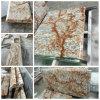 Ново и Hot Sale Verniz Tropical Granite Countertops для Kitchen