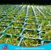 HDPEプラスチック網によって草の保護に、作られて使用した泥炭の補強の網は突き出た
