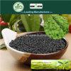 Il carbonio di Kingeta ha basato il fertilizzante composto NPK 8-6-18 per le piante