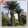 庭の装飾のガラス繊維の人工的なナツメヤシの木