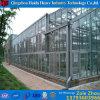 De mini Serre van het Glas van de Tuin voor kweekt Tomaat
