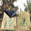 يشبع حماية زراعة ورقة ثمرة ينمو حقيبة