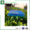 Resistencia ultravioleta de efecto invernadero de policarbonato Placa de PC