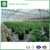 Hoja de PC de gases de efecto para la Agricultura por Xinhe