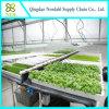 Hidropónico para la venta del fabricante grande del invernadero en China