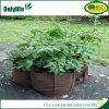 Le légume de tomate d'Onlylife Oxford élèvent des sacs pour le jardin