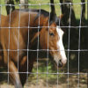 Pascolo Fence di Galvanized del cavallo con Low Price