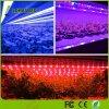 modi registrabili di colore della lampada della pianta 12W i 3 rossi & blu & il LED viola coltivano il tubo chiaro