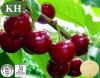 Zubehöracerola-Kirschauszug-natürliches Vitamin C