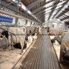 Koe van Strucure van het Staal van lage Kosten de Prefabdie met Uitstekende kwaliteit wordt afgeworpen