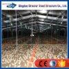 Costruzione prefabbricata della Camera del pollo da carne del pollame dell'acciaio standard in India
