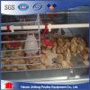 H Type птицы отсек для батареи фермы Нигерии птицеводства оборудование с высоты птичьего полета отсека для жестких дисков