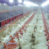 El profesional diseñó el equipo de alimentación del criador para la casa de las aves de corral