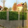 Rete fissa artificiale decorativa del foglio della parete del giardino