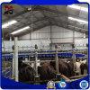 Casa clara Prefab da construção de aço para os edifícios de exploração agrícola de aço da vaca